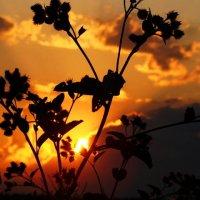 Вечернее небо. :: Маргарита ( Марта ) Дрожжина