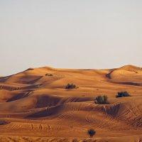 В пустыне Руб-эль-Хали...(ОАЭ). :: Александр Вивчарик