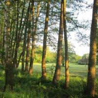 Парк в Польше :: Денис Дробот