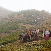 2500 над уровнем моря :: Вениамин Гордус