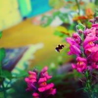 Фотоохота на пчелок :: Ирэн Герб