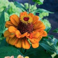 Оранжевый цветок :: Юрий Стародубцев