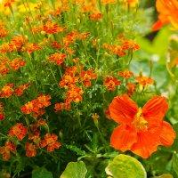 Цветы №15 :: Сергей Анисимов