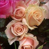 И розы проливали слёзы... :: Нина Корешкова