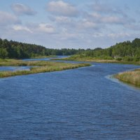 река Желча у Сорокового Бора :: Petr Popov