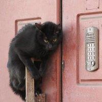 """""""Подскажите код, пожалуйста"""" :: Вера Моисеева"""