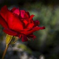 Цветок :: Аркадий Медников
