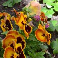 Пёстрые бабочки. :: zoja