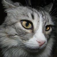 Кошка  Мышка :: Анатолий Стрельченко