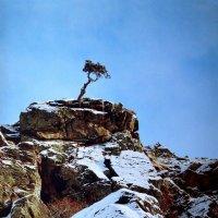 На семи ветрах :: Олег Попов
