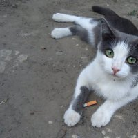 Я бросил курить...а вы? :: Ирина