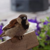 birdy :: Veronika Lysenko