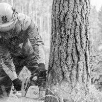Валка леса - тоже спорт! :: Денис Samuila