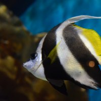 рыбка :: Ольга Захарова