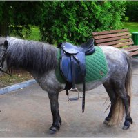 А пони тоже кони.. :: Антонина Гугаева
