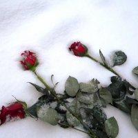 Прощание с любовью :: @льга Б@р@дина