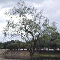 Дерево... :: BoxerMak Mak
