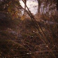 Грибной дождь.2 :: Валерий Стогов