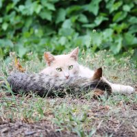Без кота жизнь не та) :: Olga Volkova