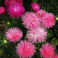 Цветы из жаркого лета Фото №3 :: Владимир Бровко