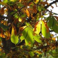 Скоро осень.. :: Olga Volkova