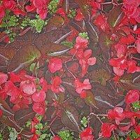 Цветочная ткань :: Григорий Кучушев