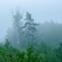 Туман :: Дмитрий Крыжановский