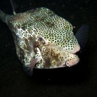 ночная встреча в глубине морской :: ОлЪг Милеев