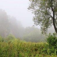 Мелодией туманной тишины.... :: Лесо-Вед (Баранов)