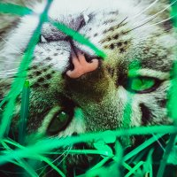 Кот в траве :: Анастасия Александрова