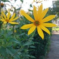 ...цветочек земляной груши... :: NюRа;-) Ковылина