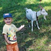 И этой козой меня пугали ?! :: Владимир Акилбаев