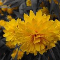 Цветок :: Алена Бушевая