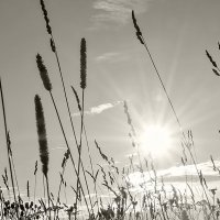 жаркий июль :: Galina