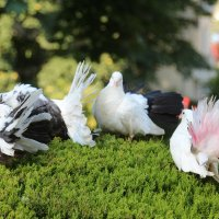 Птички :: Александр Шишков
