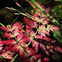 краски леса :: лиана алексеева