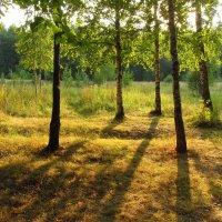 Один день августа  - IMG_3891 :: Андрей Лукьянов