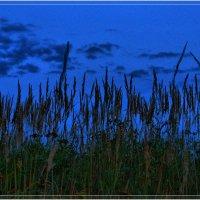 Вечернее поле :: Андрей Куприянов