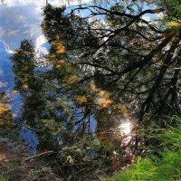 В тени зеркальных отражений... :: Лесо-Вед (Баранов)