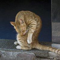 На входе-из серии кошки очарование моё! :: Shmual Hava Retro