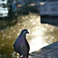 Одинокий мужчина желает познакомиться) :: Ксения Базарова
