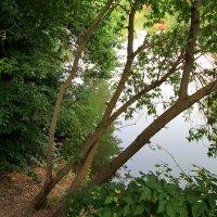 Склонились деревья к пруду... :: Тамара (st.tamara)