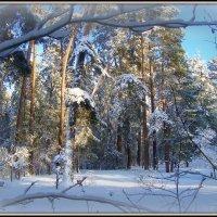 окно в зиму... :: Галина Филоросс