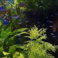 Тропический аквариум. :: Андрей