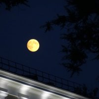 Городская луна. :: Лариса Авдонина