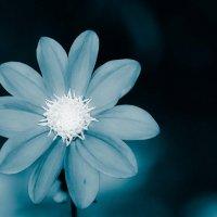 Цветок :: Геннадий Хоркин