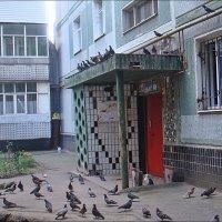 Облюбовали  голуби дворик :: Нина Корешкова