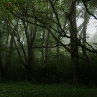 Mysterious forest :: Nina Uvarova