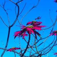 Цветущее дерево :: Марина Бушуева