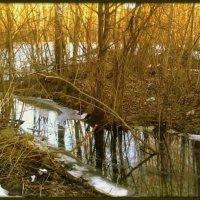 Снова запахло прелой листвой, льдинки хрустят под ногами... :: veilins veilins